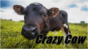 Crazy Cow - Full Bestiality And Zoofilia Movies